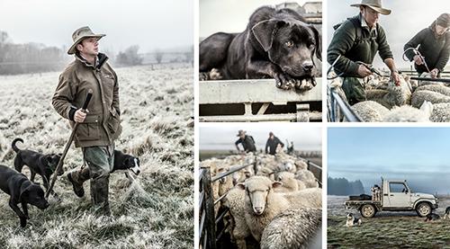 Sheep Herding Collage